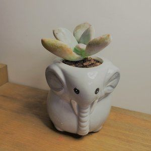 Other - Ceramic Elephant Planter with Live Succulent
